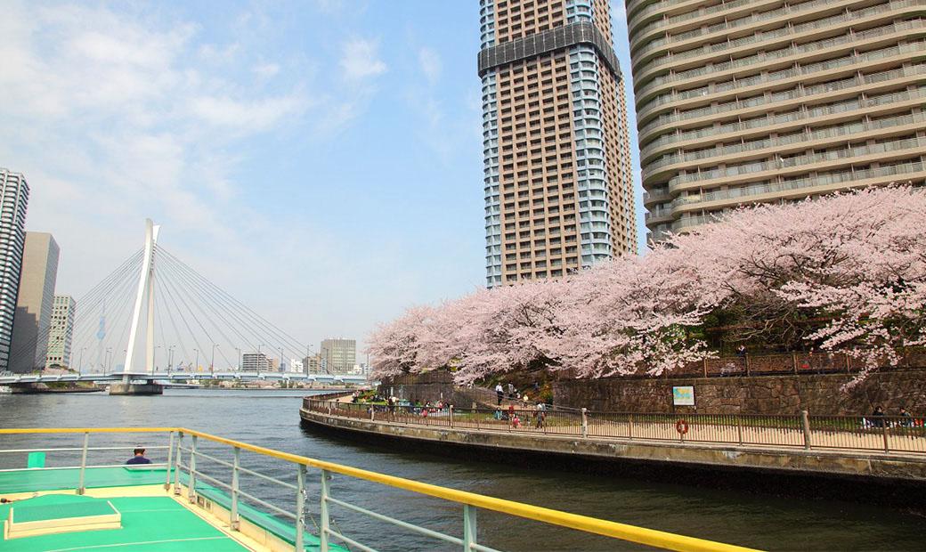봄 이미지